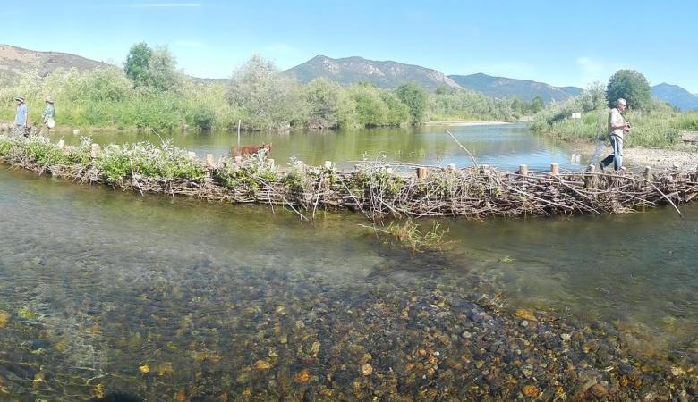 Beaver Dam Analogue