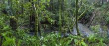 Van Auken Creek