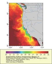 Sea Surface Temperature map of the California Coast