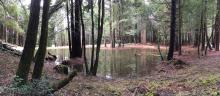 Sanctuary Forest Baker Creek project