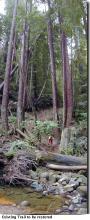 Before the Restoration, mountain biking photo (2001)
