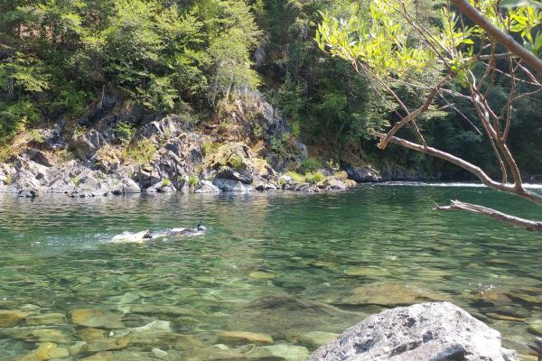 Workshop - Juvenile Salmonid Identification in Lower Smith River (Photo credit Adriane Garayalde)
