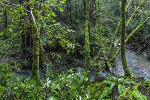 Van Auken Creek, Grant Johnson