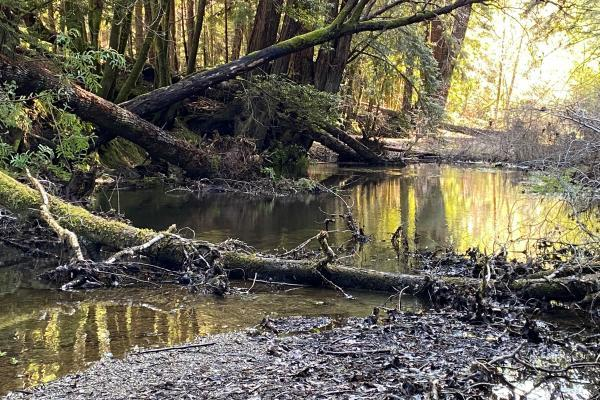 A stream with large woody debris