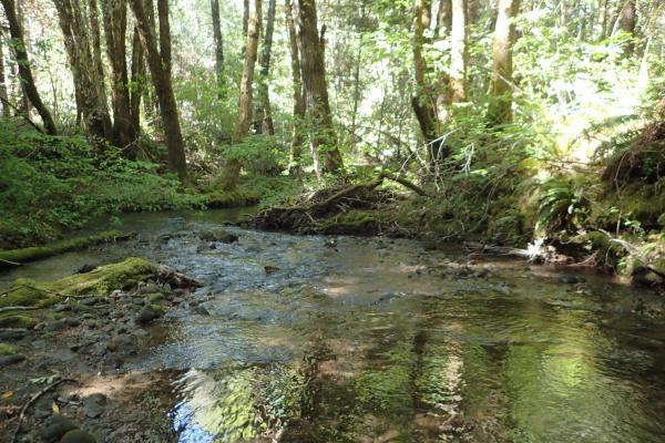 Upper Redwood Creek May 2020