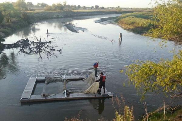 Spring-run Release in the San Joaquin River. Photo by Elif Fehm-Sullivan