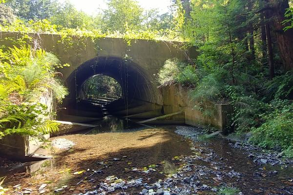Field Tour - Peacock Creek Fish Passage Project
